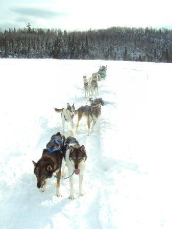 Bearskin Lodge: Dog sledding