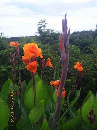 Allegro Papagayo: fleurs