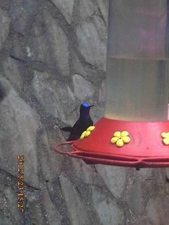 Allegro Papagayo: Hummingbird garden, Arenal