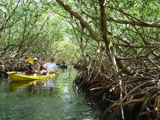 Upachaya Kayak through the Mangroves