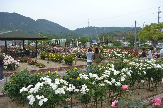 Yoshiumi Rose Park