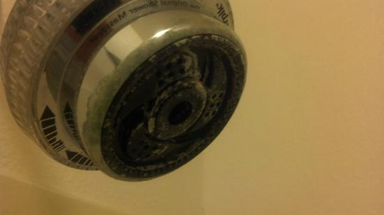 Baymont Inn & Suites Coralville : Grimy shower head. Didn't know pet-friendly rooms included icky shower heads.