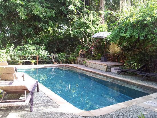 LadyBamboo Villa: The pool surronded by big trees