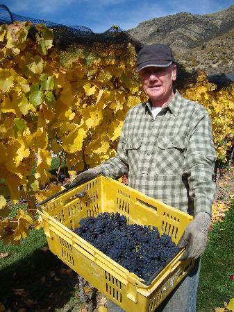 Harvest Day at Mt Rosa Lodge