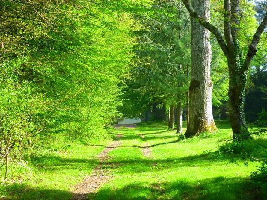 Domaine de la Roche : Chemin de balade dans le Domaine