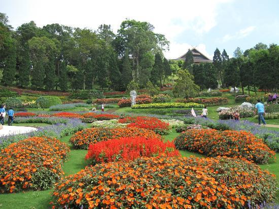 DoiTung Lodge : 皇室庭園