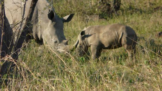Mpila Camp: Rhino and calf