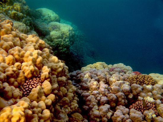 فندق جورجونيا بيتش: Outer reef