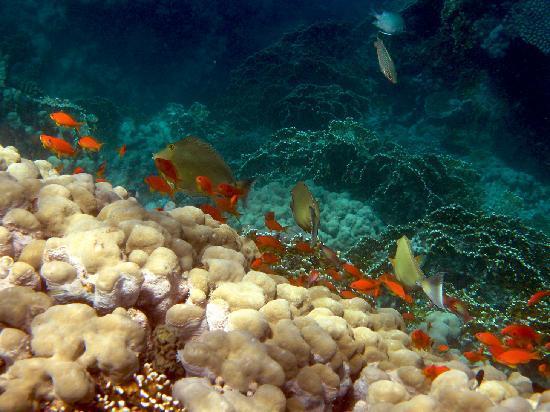 Gorgonia Beach Resort Outer Reef