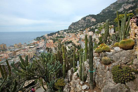 Cactus fiorito picture of exotic garden jardin exotique for Boulevard du jardin exotique monaco