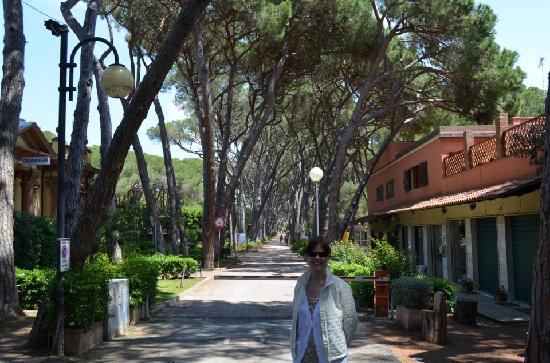 Bagno Conchiglia Castiglioncello : Bagno la conchiglia in pineta foto di hotel leopoldo