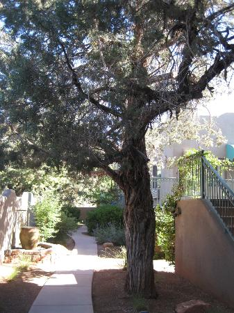 Southwest Inn at Sedona: Juniper tree & water features