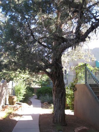 Southwest Inn at Sedona : Juniper tree & water features