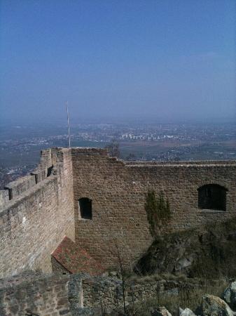 Château du Hohlandsbourg : Chateau du Hohlandsbourg, ramparts & Colmar in the distance