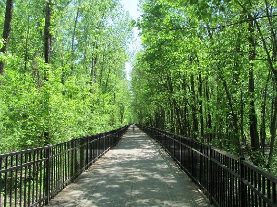 Burlington Bike Path: Forest