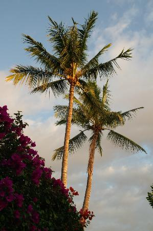 Hale Huanani Bed and Breakfast: The Gardens