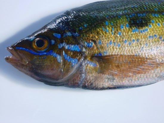 هوتل بالاديو: nel ristorante del Palladio cuciniamo solo pesci freschi e locali e mai d'allevamento