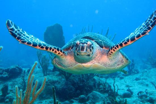 Dive Adventures : Turtle up an close