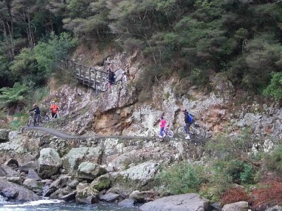Hauraki Rail Trail - Day Rides