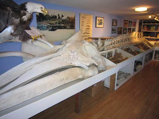 The Whale Centre & Museum
