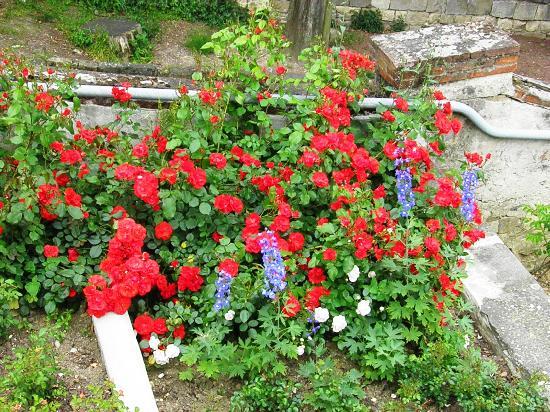 Cespugli foto di folon e il giardino delle rose firenze - Cespugli da giardino ...