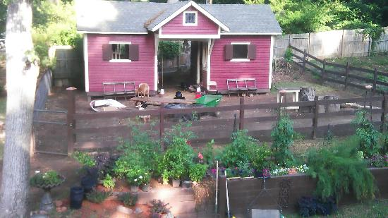 The Social Goat Bed & Breakfast: There really are farm animals in the middle of Atlanta