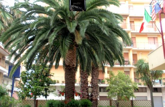 Hotel Giancarlo: Uno scorcio del giardino