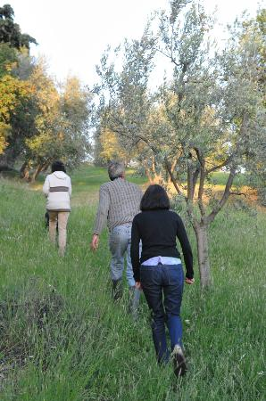 A Casa di Olivo: Walk among the olive trees with Mauro and Laura