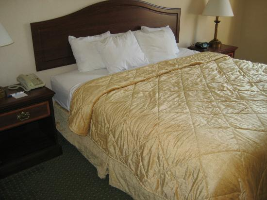 Comfort Inn: Clean and comfy bed
