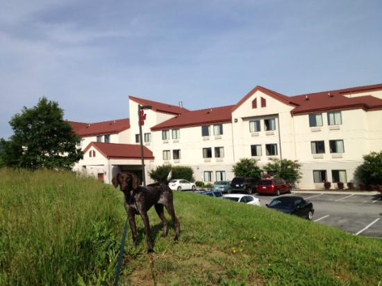 Red Roof Inn Roanoke - Troutville: A pleasant and pup-friendly hotel