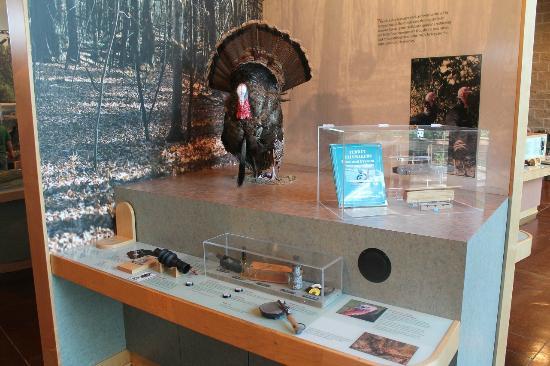 Forrest L Wood Crowley's Ridge Nature Center: Turkey display