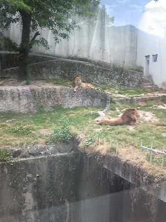 公園 安佐 動物