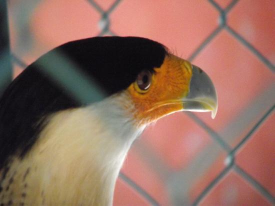 Acuario Mazatlan: Hawk.