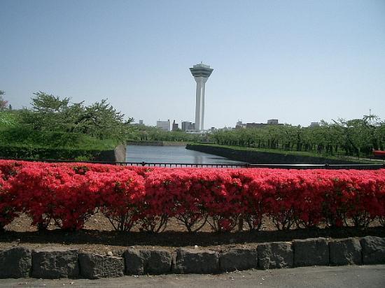 Goryokaku Park: つつじと五稜郭タワー