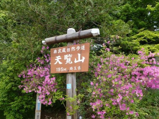 Mt. Tenran : 頂上