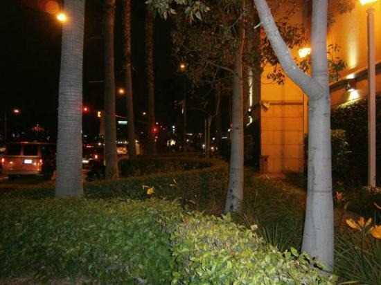 Ayres Hotel Anaheim: Lovely gardens