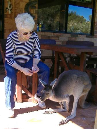Woollybush Guest House : Peggy meets Chloe