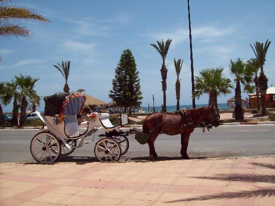 Yasmin Hammamet: horse and carriage