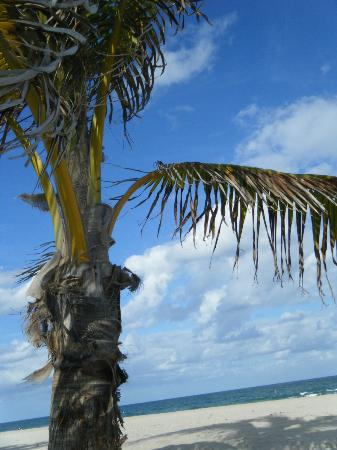 Southern Seas: beach view from under palm tree at edge of resort