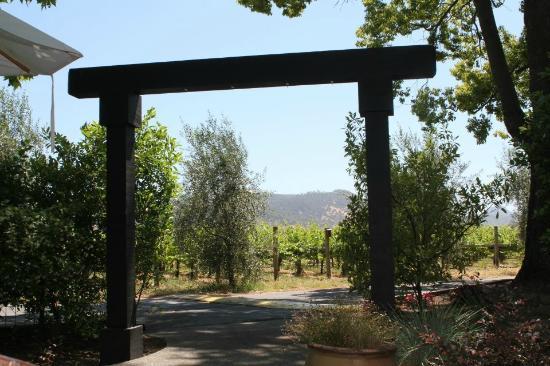 Honig Vineyard & Winery : The view