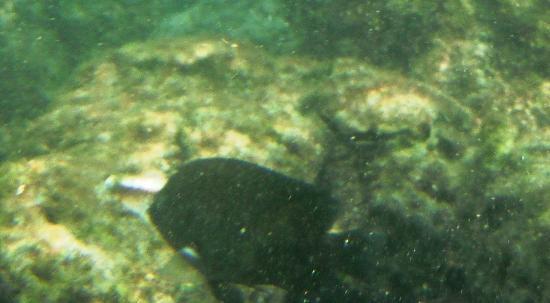 Hotel & Club Punta Leona: snorkeling off beach