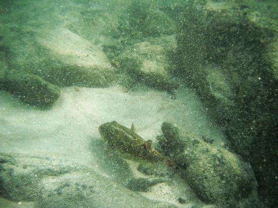 Hotel & Club Punta Leona: fish snorkeling