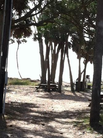 Hunting Island State Park: picnic site
