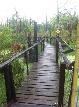 Hard Rock Cafe: swamp bridge