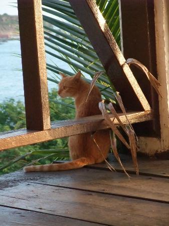 Kings Well Resort: Watching the wildlife