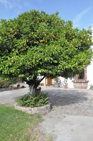 Posada de La Aldea: Beautiful orange tree in the front yard