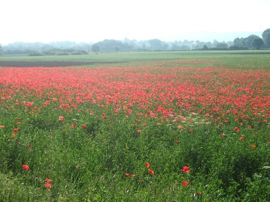 Agriturismo Nerbona: Fields surrounding Nerbona