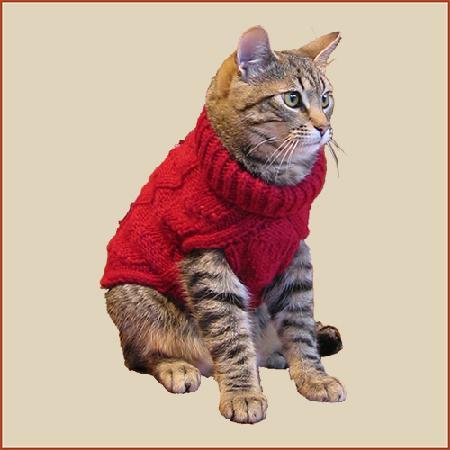 FiberWild!: Scout, our store kitty!