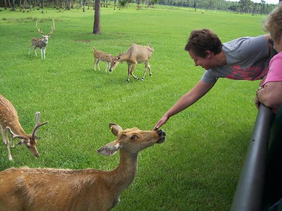Safari Wilderness: feeding apple slices