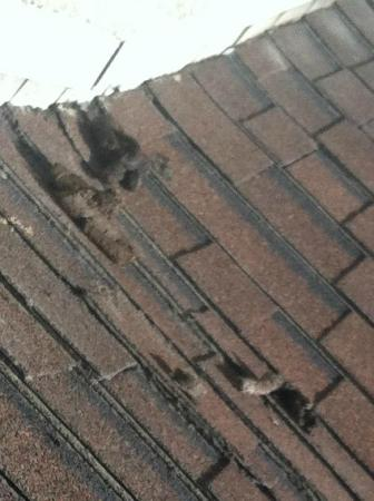 Days Inn Long Beach City Center: Poop that was on the roof and they did not remove it